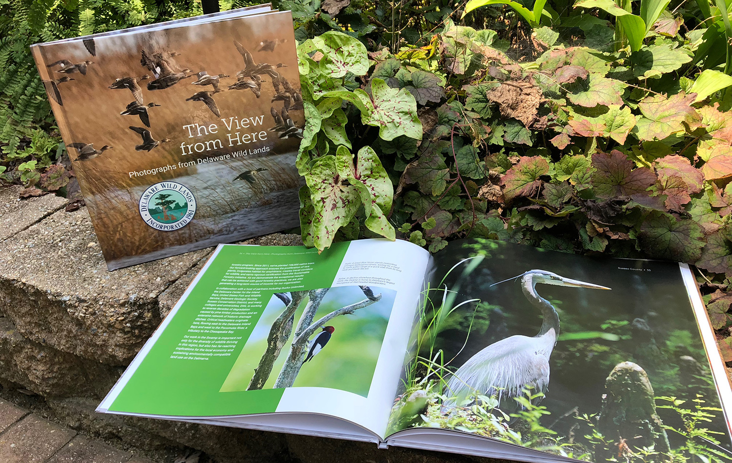 Examples of print work for Delaware Wild Lands